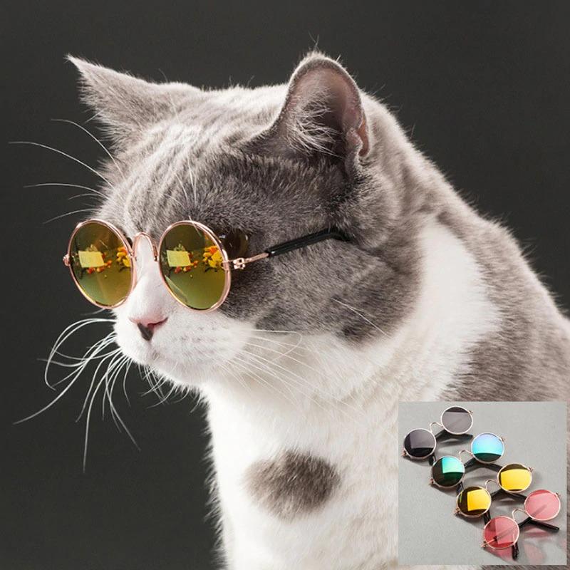 очки для кота