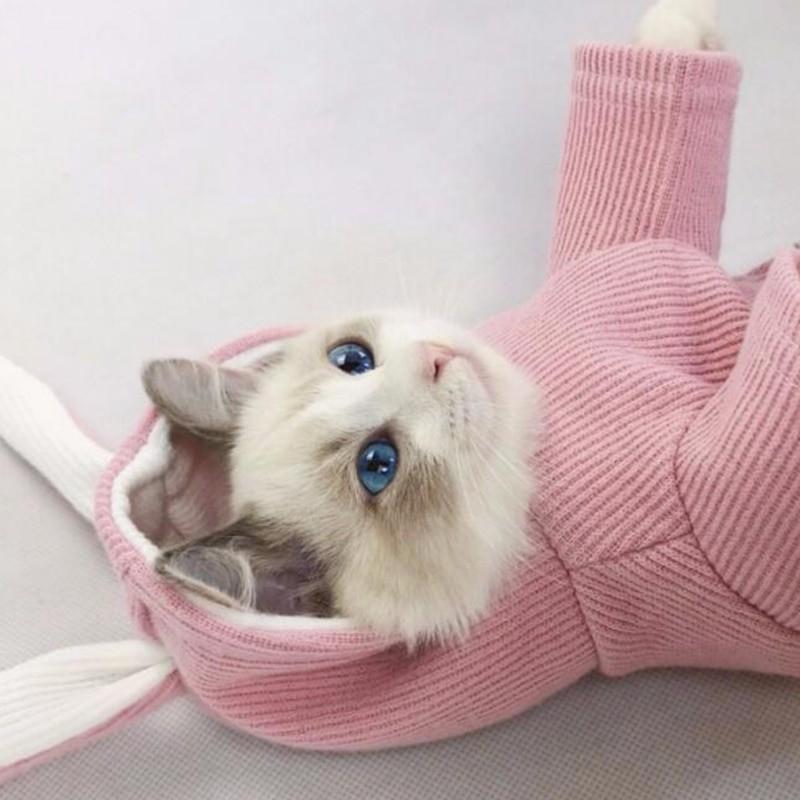 кофта для кошки Одежда для кошек и собак