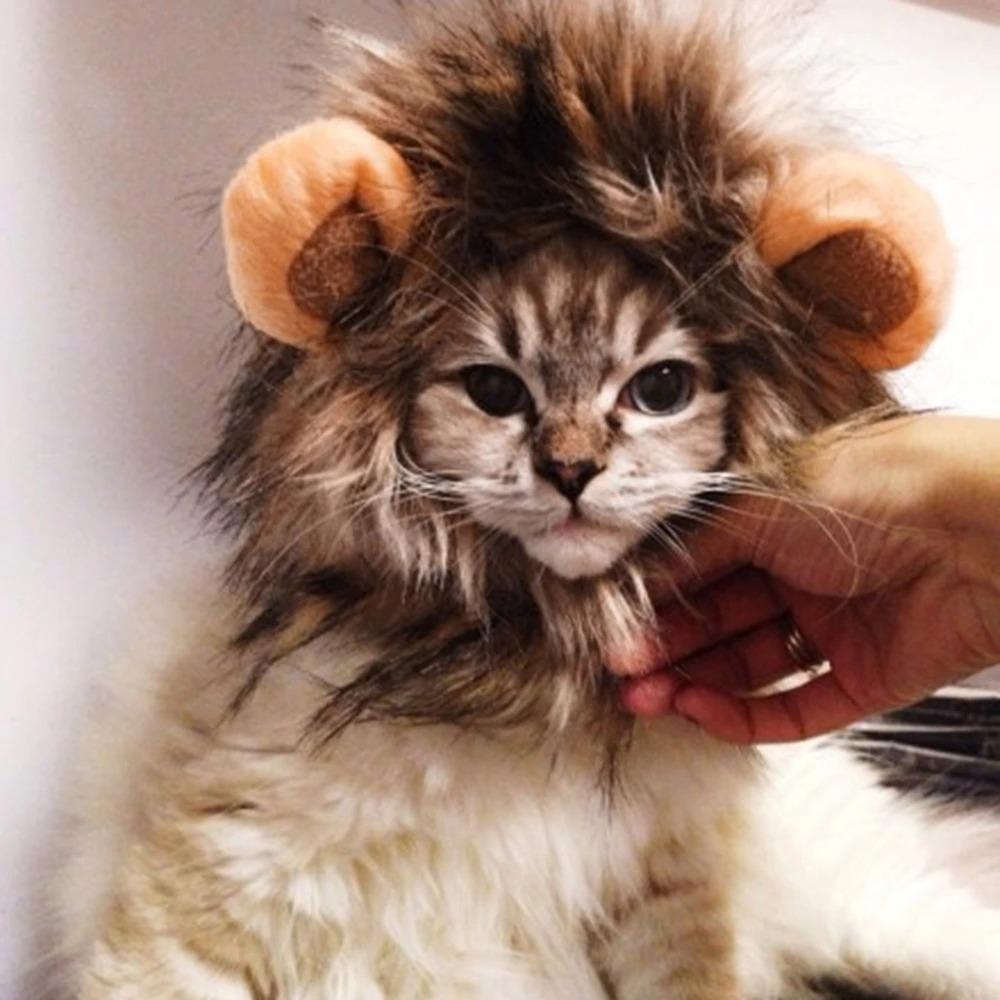 костюм льва для кота