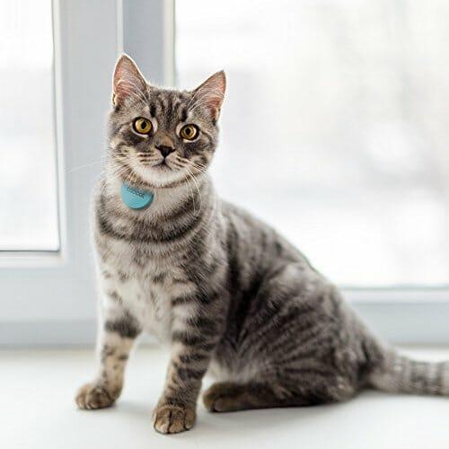 треккер для кота