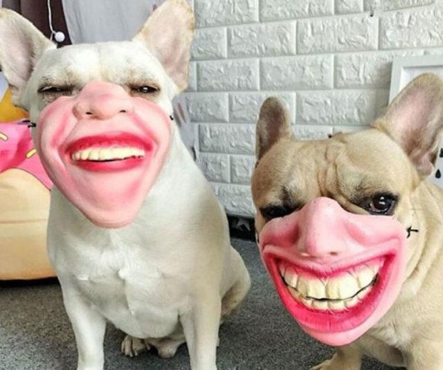 намордник для собаки с человеческим лицом